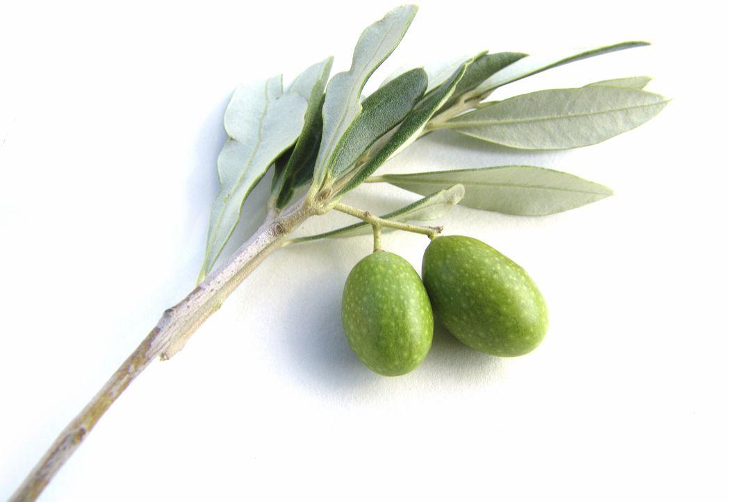 Крем для рук з оливкою
